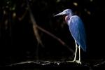 Egrit-Bird-Friend